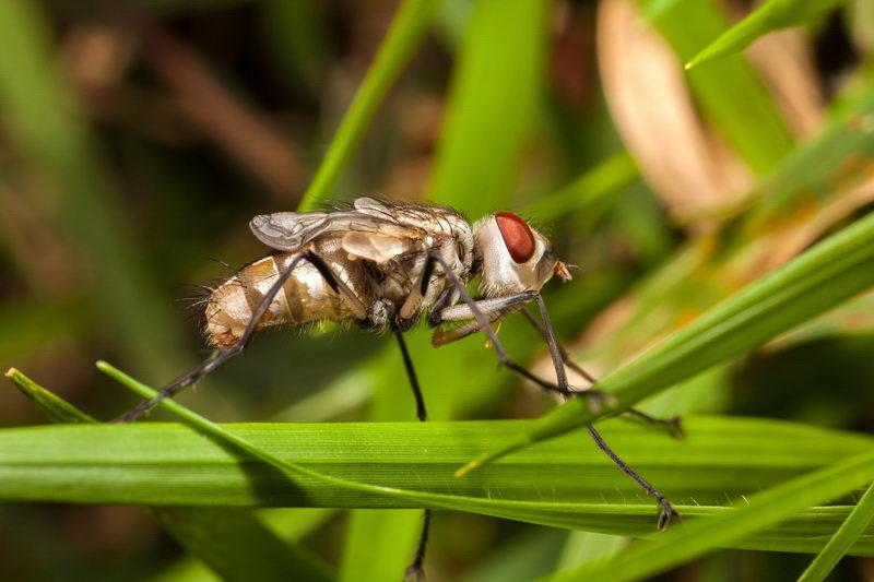 טיפים להדברת זבובים